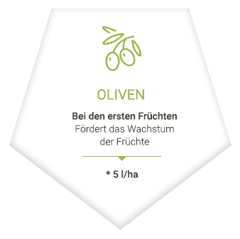 applications_de_olive