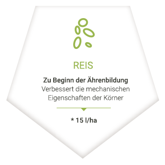 applications_de_riz