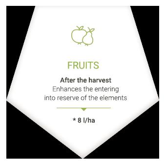 applications_en_fruits