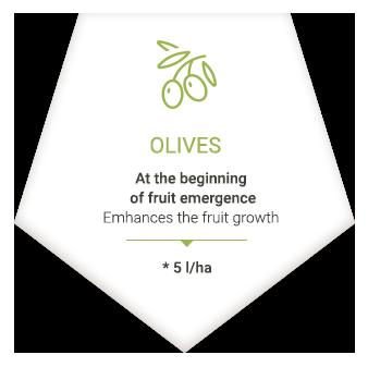 applications_en_olive
