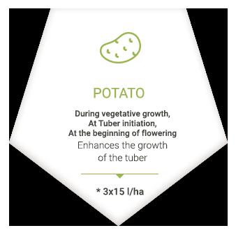 applications_en_patate