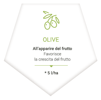 applications_it_olives