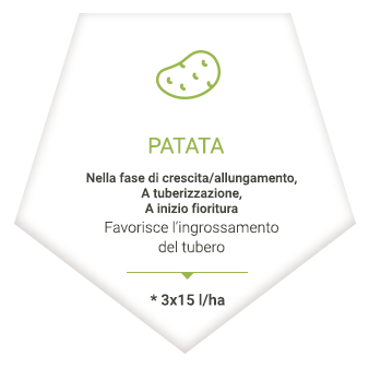 applications_it_patate